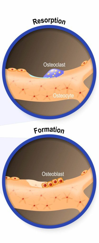 bone resorption and formation